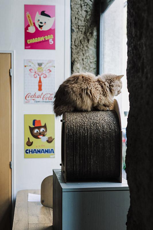 Gentle Cat Bar A Chats Brunch Lovers Bonne Adresse Lyon 2 chat